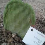Desert ArtLAB Brings LAND Knowledge to Phoenix