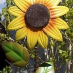 Roosevelt Row Breaks Ground for Sunflowers