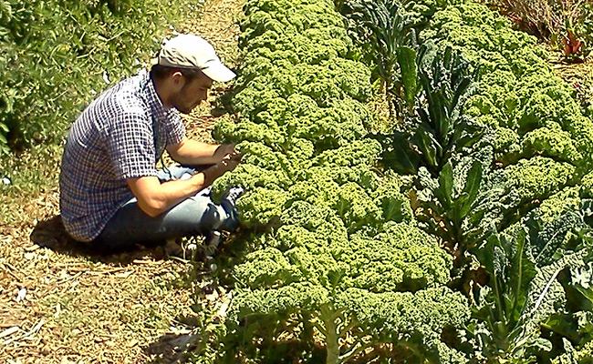 Garden-Alemany-Farms-SFO