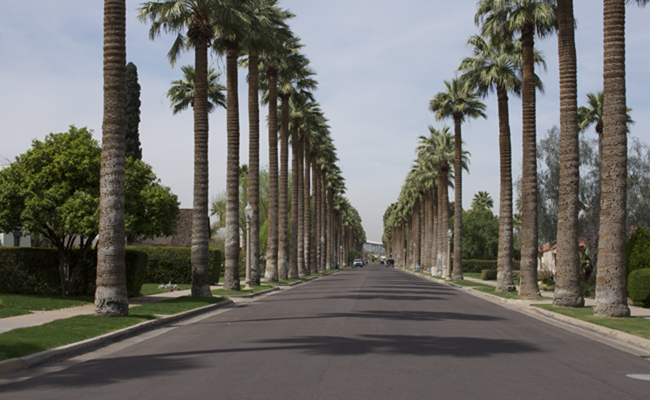 A palm lined street in Encanto-Palmcroft