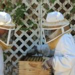 Bioscience student beekeepers