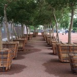 Wire | Displaced Trees Find New Homes in Downtown Phoenix