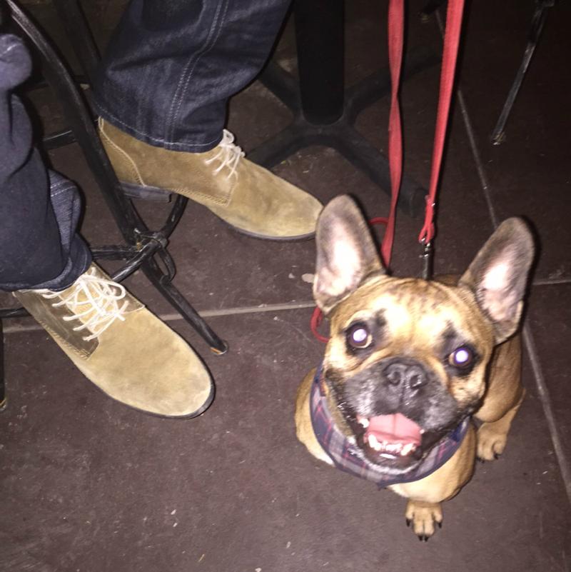 street_style_dog