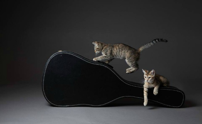 Cats & guitars. Courtesy of Chartreuse Gallery.
