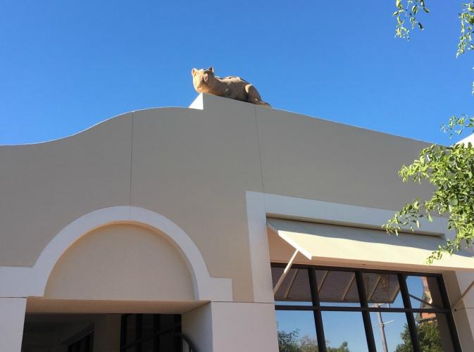 Mercado Cat