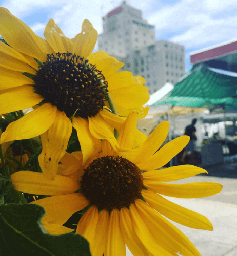PPM_sunflowers small
