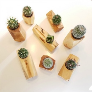 Lola and Pine Design.