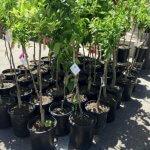Urban Farm Kicks off 18th Annual Fruit Tree Program